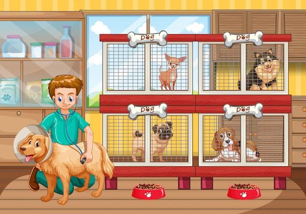 Dierenarts die vele honden in het ziekenhuis controleert Gratis Vector