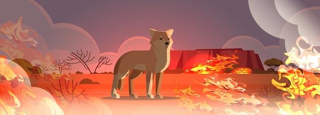 Dingo ontsnappen uit branden in australië dier sterven in wildvuur bushfire natuurramp concept intense oranje vlammen horizontaal Premium Vector