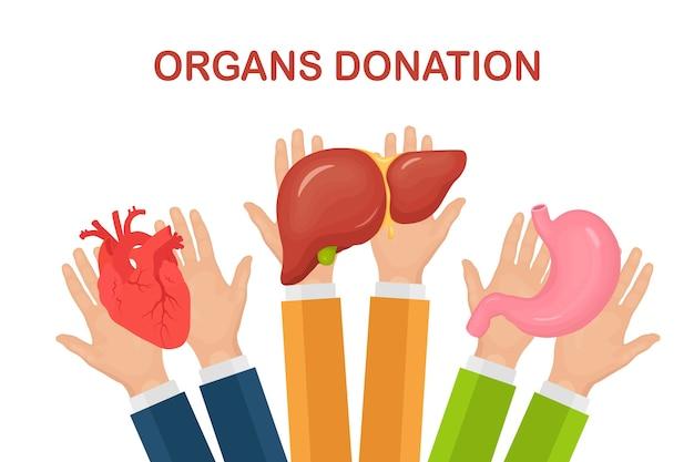 Donatie-organen. de handen van de arts houden de maag, het hart en de lever van de donor vast voor transplantatie. vrijwillige hulp Premium Vector