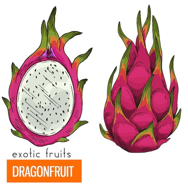 Dragon fruit. realistisch in kleur Premium Vector