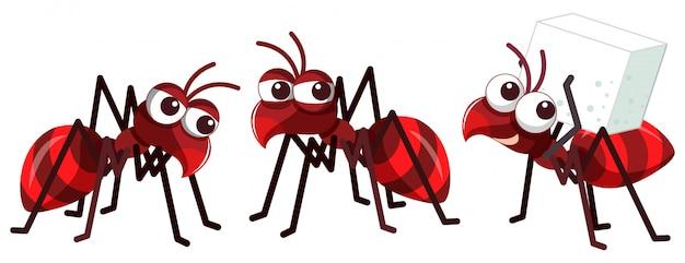 Drie kleine rode mieren op een witte achtergrond Premium Vector