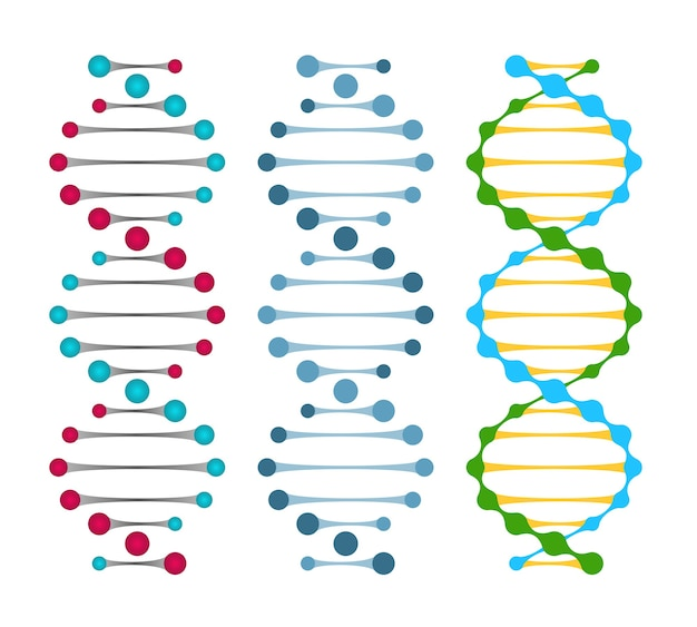 Drie varianten van dubbelstrengs dna-moleculen die de nucleotideparen in een dubbele helix vectorillustratie tonen Gratis Vector