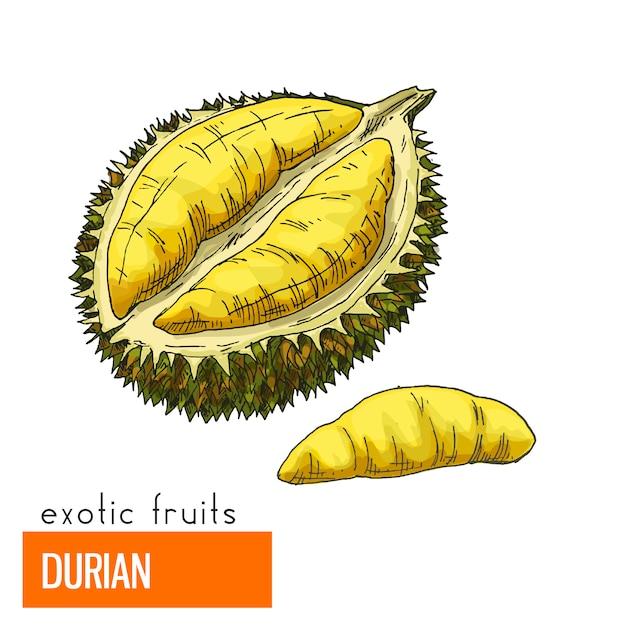 Durian. kleur vectorillustratie. Premium Vector