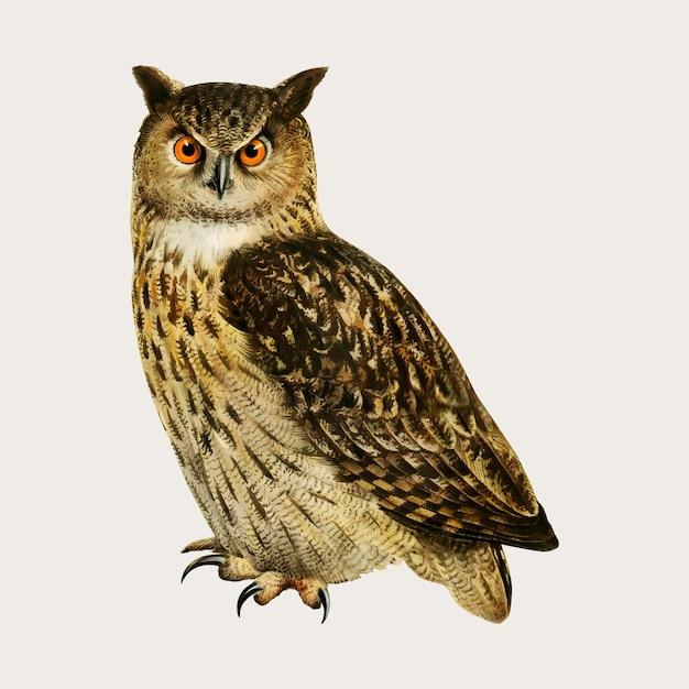 Eaurasian oehoe vogel in hand getrokken stijl Gratis Vector
