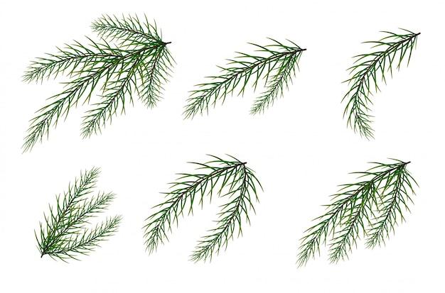 Een aantal dennentakken. de kerstboom. Premium Vector