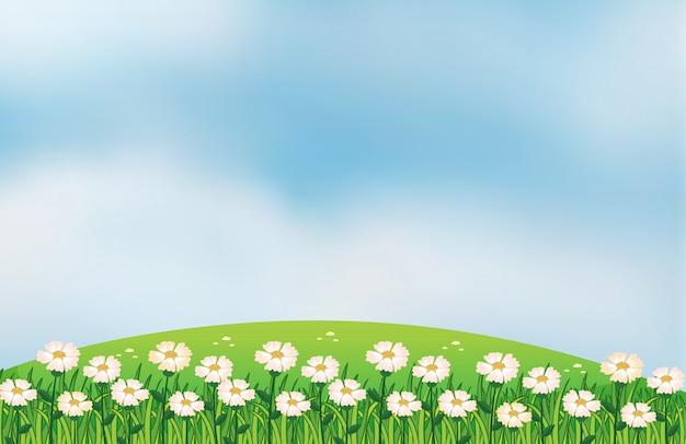 Een bloemenplantage op de top van de heuvels Gratis Vector