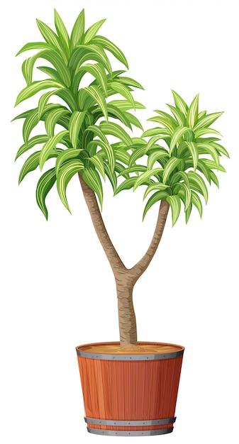 Een boom die in de pot plant Gratis Vector