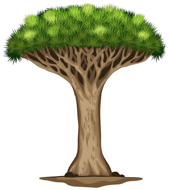 Een drakenbloedboom Gratis Vector
