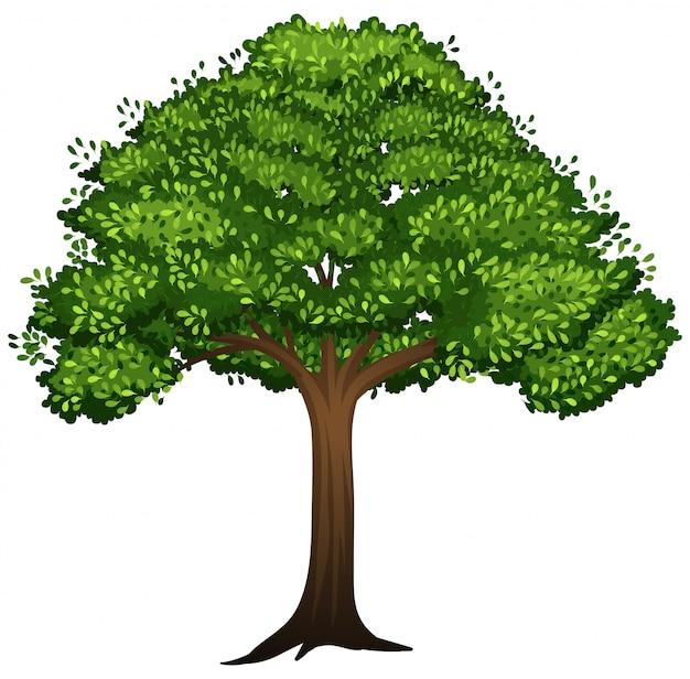 Een geïsoleerde boom op witte achtergrond Gratis Vector