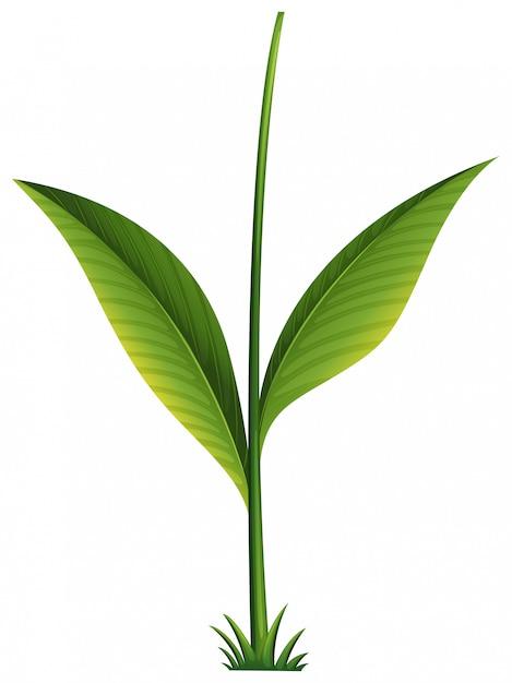 Een groene plant Gratis Vector