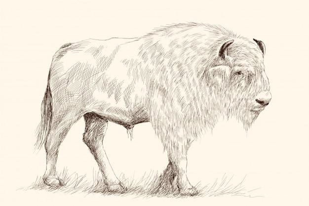 Een grote oude bizon staat op zijn voeten in het gras. potlood hand tekenen schets op beige Premium Vector