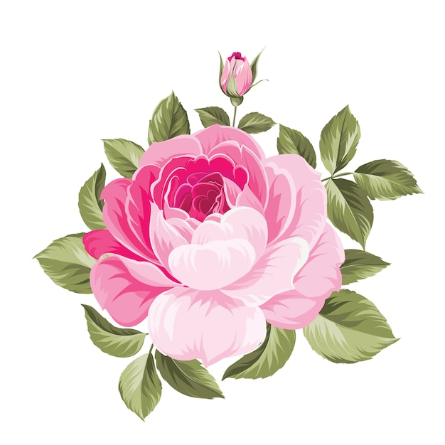 Een lente decoratief boeket rozenbloemen. Premium Vector