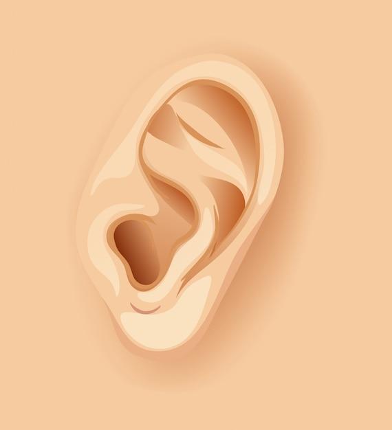 Een menselijk oor close-up Gratis Vector