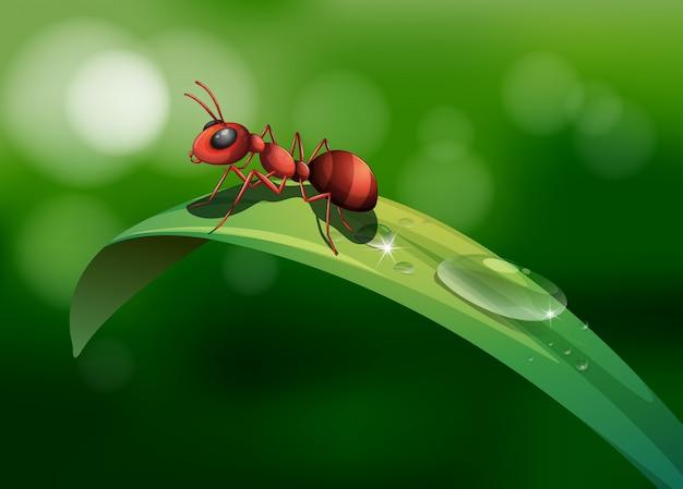 Een mier boven het blad Gratis Vector