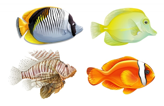 Een set van 4 tropische vissen Gratis Vector