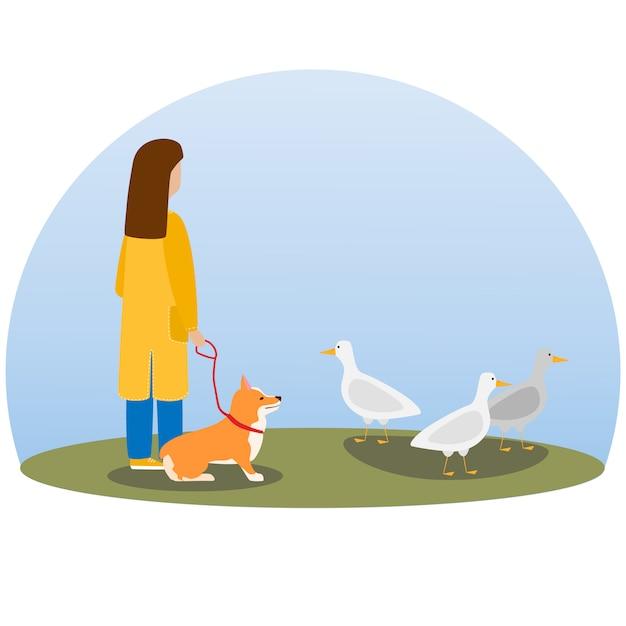 Een vrouw die hond loopt. gelukkige schattige hond. welsh corgi. puppy zit en kijkt naar wilde eenden Premium Vector