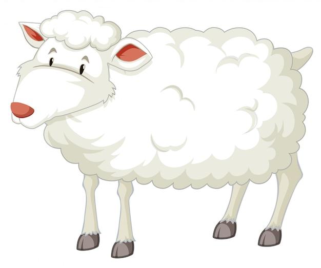Een wit schapenkarakter Gratis Vector