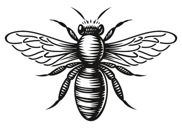 Een zwart-witte honingbij in gravurestijl op witte achtergrond Premium Vector