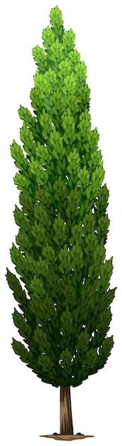 Een zweedse zuilvormige plant Gratis Vector
