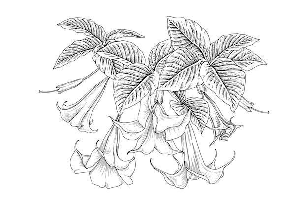 Engelen trompetbloem brugmansia-tekeningen Gratis Vector