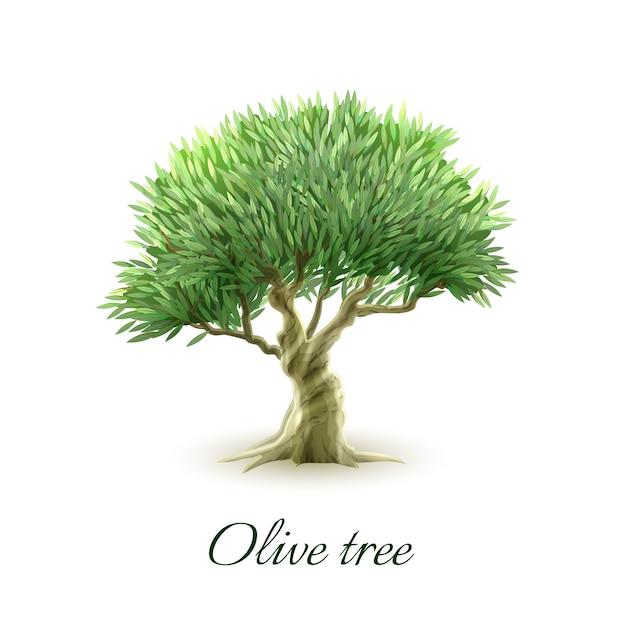 Enkele olijfboom fotoafdruk Gratis Vector