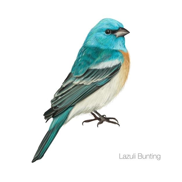 Exotische blauwe kardinaal vogel Premium Vector