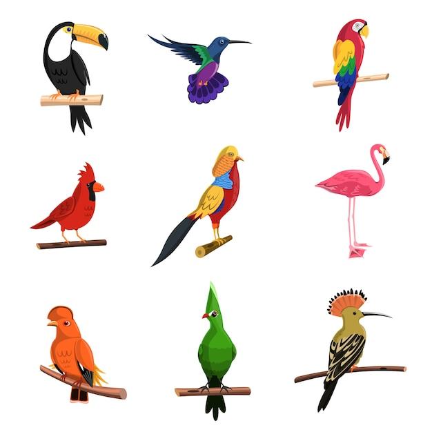 Exotische vogels ingesteld Gratis Vector
