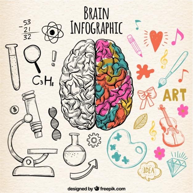 Fantastische menselijk brein infographic met kleurdetails Gratis Vector