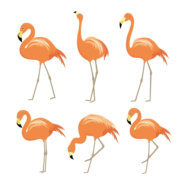 Flamingo pink animal bird cartoon karakter vector Premium Vector