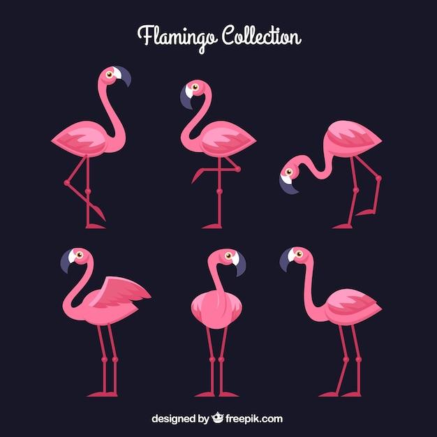 Flamingo's collectie met verschillende houdingen in vlakke stijl Gratis Vector