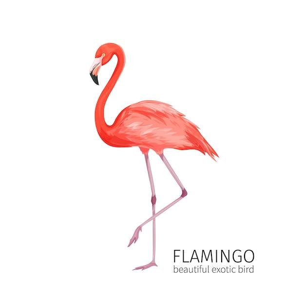 Flamingo vogel Premium Vector