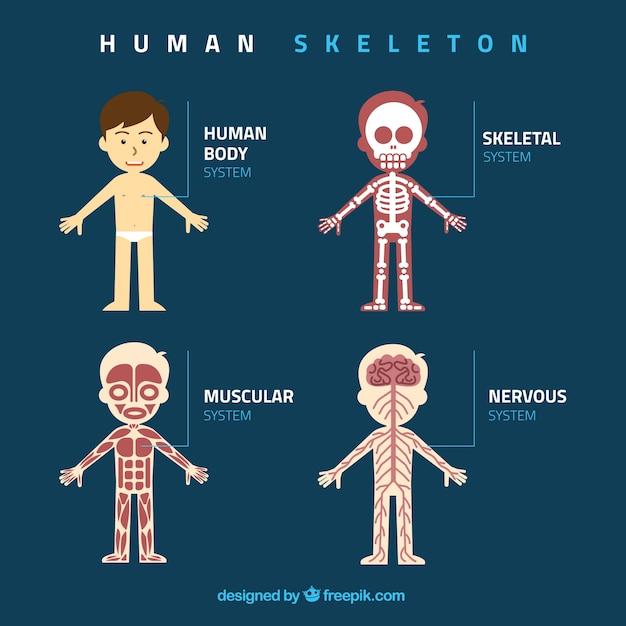 Flat human x ray illustratie Gratis Vector