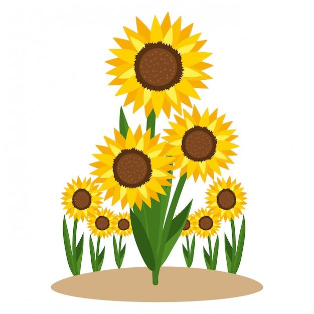 Foral zonnebloem natuur cartoon Premium Vector