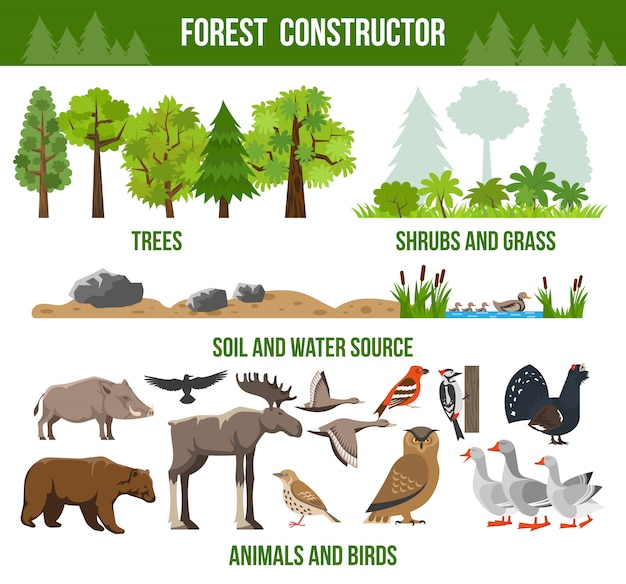 Forest constructor poster Gratis Vector