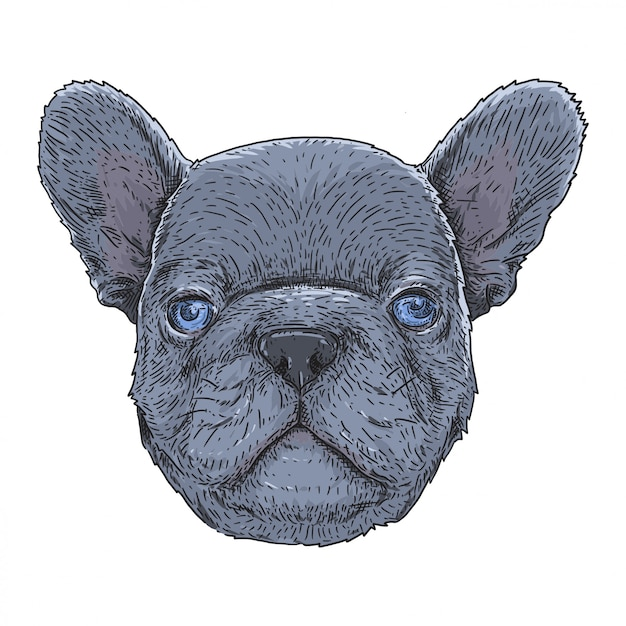 Franse bulldog blauwe ogen Premium Vector