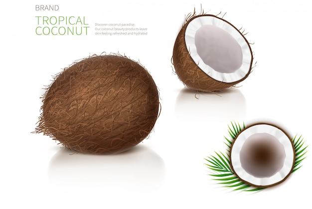 Gebroken en hele kokosnoot Gratis Vector