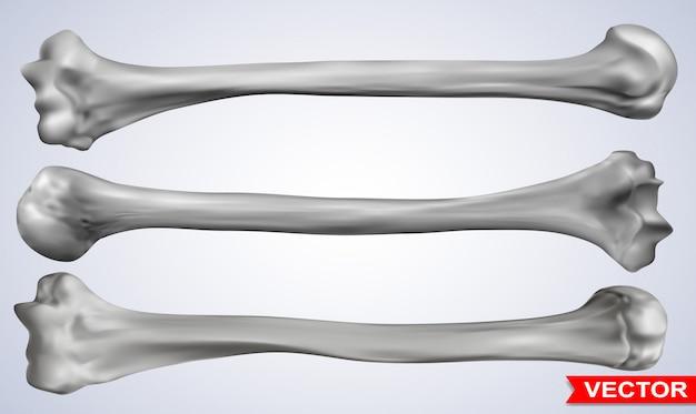 Gedetailleerde grafische fotorealistische menselijke botten set Premium Vector