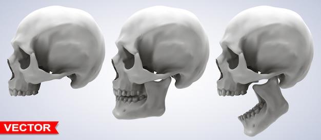 Gedetailleerde grafische fotorealistische menselijke schedels set Premium Vector