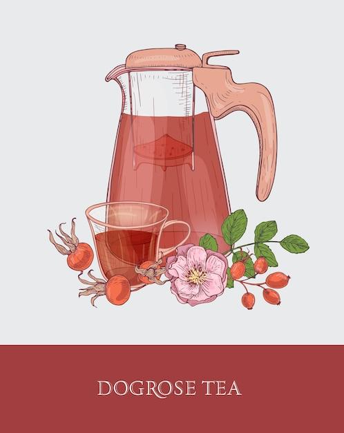 Gedetailleerde tekening van glazen kan met zeef, kopje thee en hondsroos bloemen, bladeren en rode heupen Premium Vector