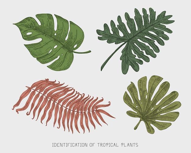 Gegraveerde, handgetekende tropische of exotische bladeren, blad van verschillende vintage uitziende planten. monstera en varen, palm met bananen plantkunde set Premium Vector