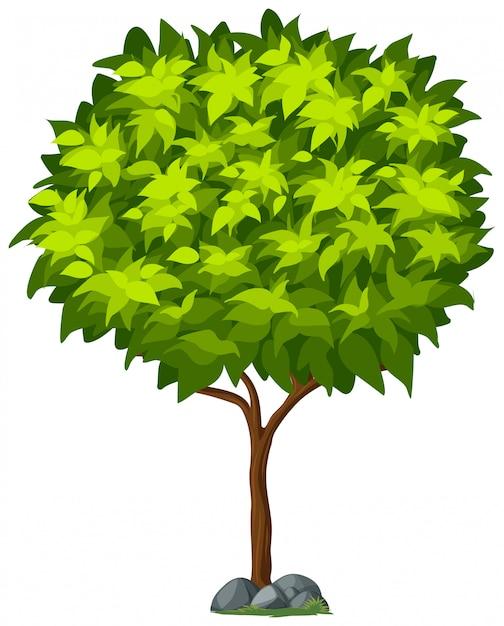 Geïsoleerde boom op witte achtergrond Gratis Vector