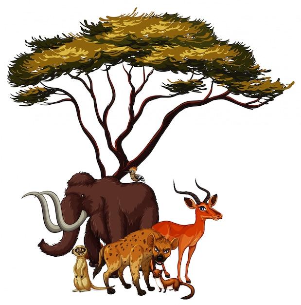 Geïsoleerde foto van dieren onder de boom Gratis Vector