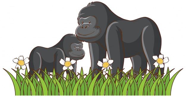 Geïsoleerde foto van gorilla's in het park Gratis Vector