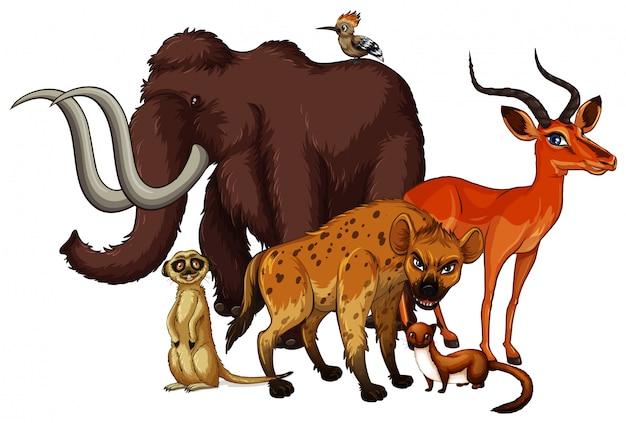 Geïsoleerde foto van veel dieren Gratis Vector