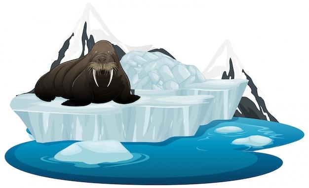 Geïsoleerde foto van walrus op ijs Gratis Vector