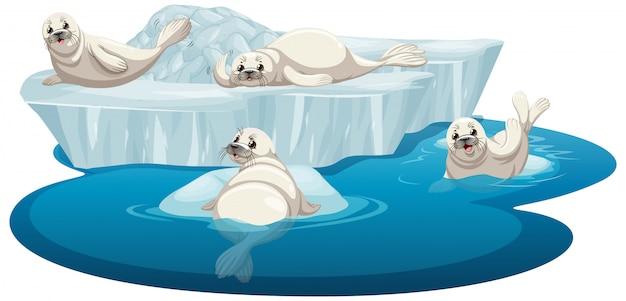 Geïsoleerde foto van witte zeehonden Gratis Vector