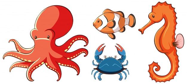 Geïsoleerde foto van zeedieren Gratis Vector