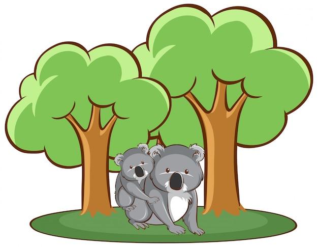 Geïsoleerde hand getrokken van koala in bos Gratis Vector