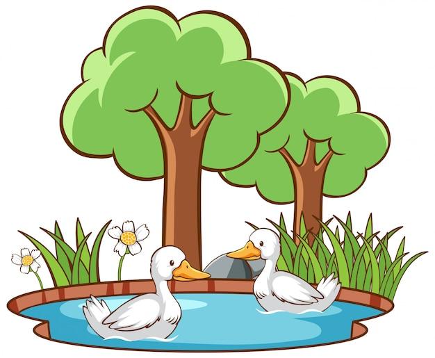 Geïsoleerde twee eenden in de vijver Gratis Vector