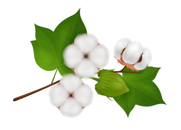 Gekleurde katoen bloem tak realistische compositie met drie prachtige bloemen op wit Gratis Vector